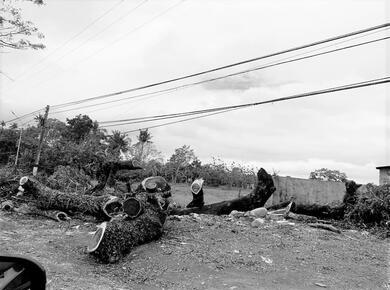 tree trunks chopped down